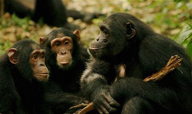Virunga National Park Safaris