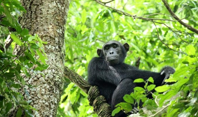 Virunga Information